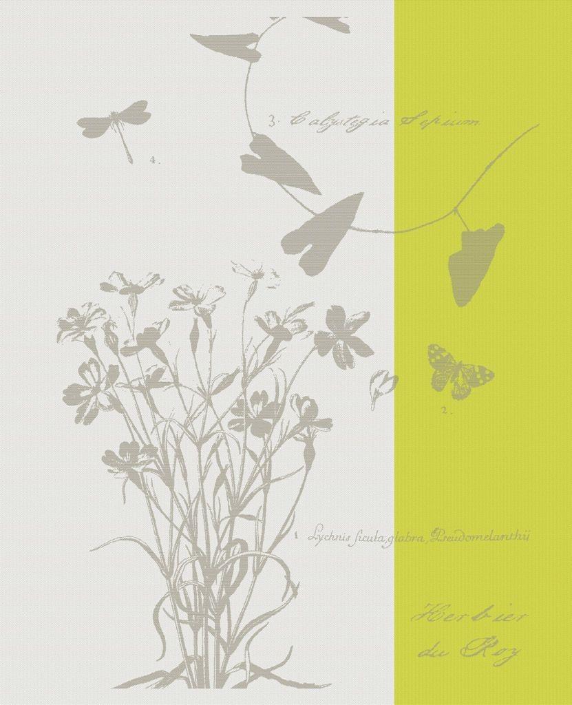Herbier du roy - Torchon fenouil, collection réunion des musés nationaux