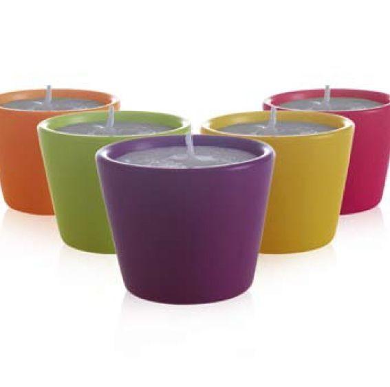 Tout fruit Tout Fleur - Bougie Vase  Capucine